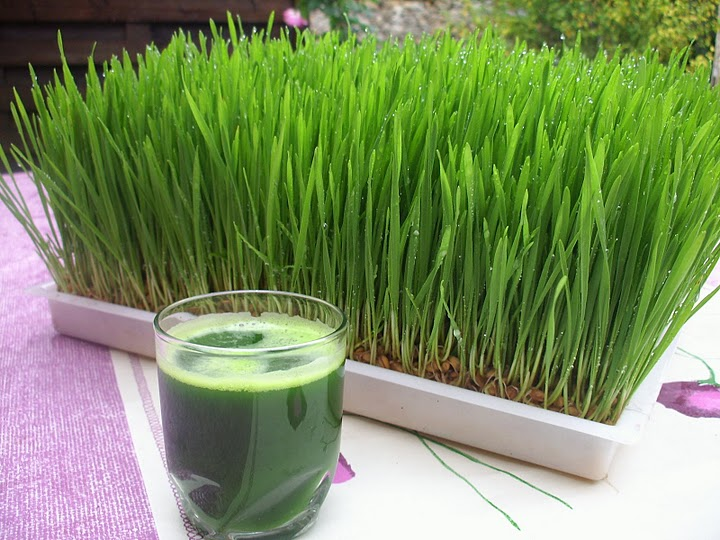 Wheatgrass Shots – The Scoop
