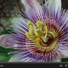 WATCH: A Moment of Gratitude ~ Guided Visual Meditation